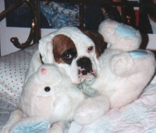 Petey's pillow when he was left alone.